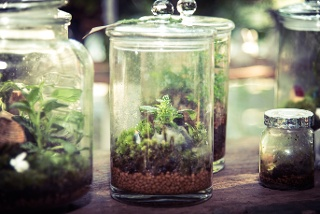 Birmingham-Apartment-jar-terrarium