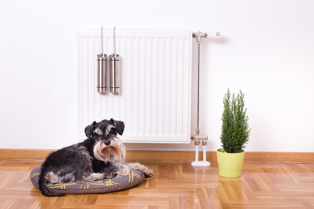 The 5 Best Pets for Small Spaces