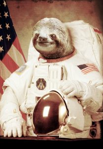 Sloth in an astronaut suit.