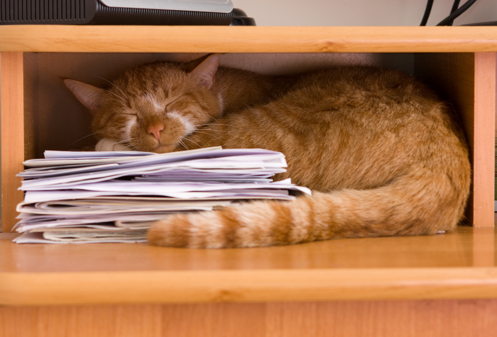 Cat resting in desk cubby.