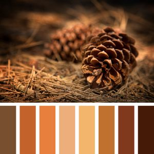 Fall color palette with pine cone