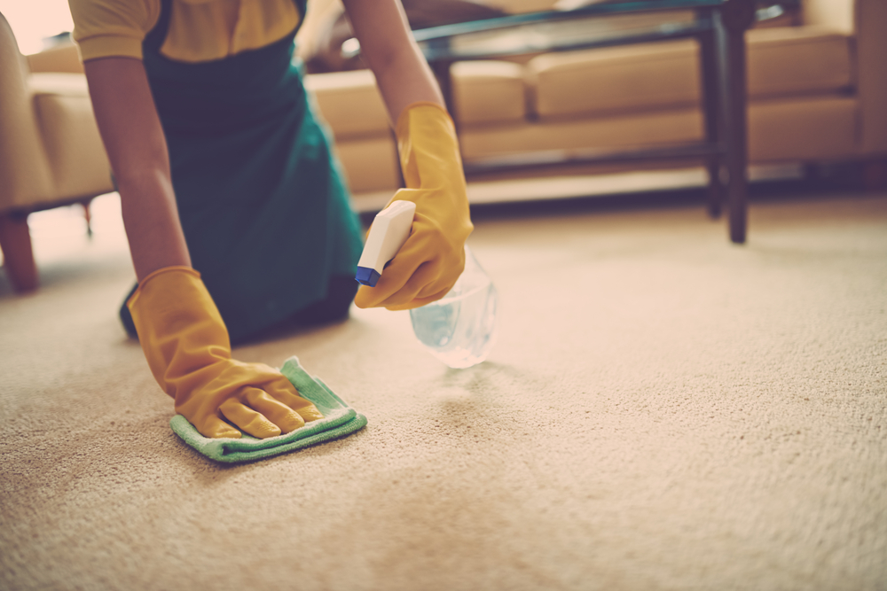 Person holding spray bottle and wiping a cloth on carpet.