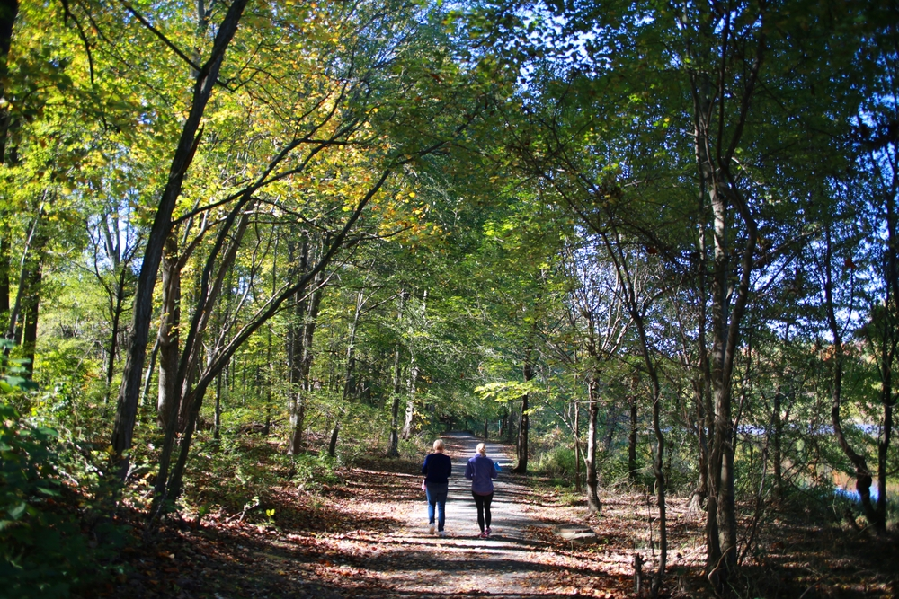Couple walking on wooded path.