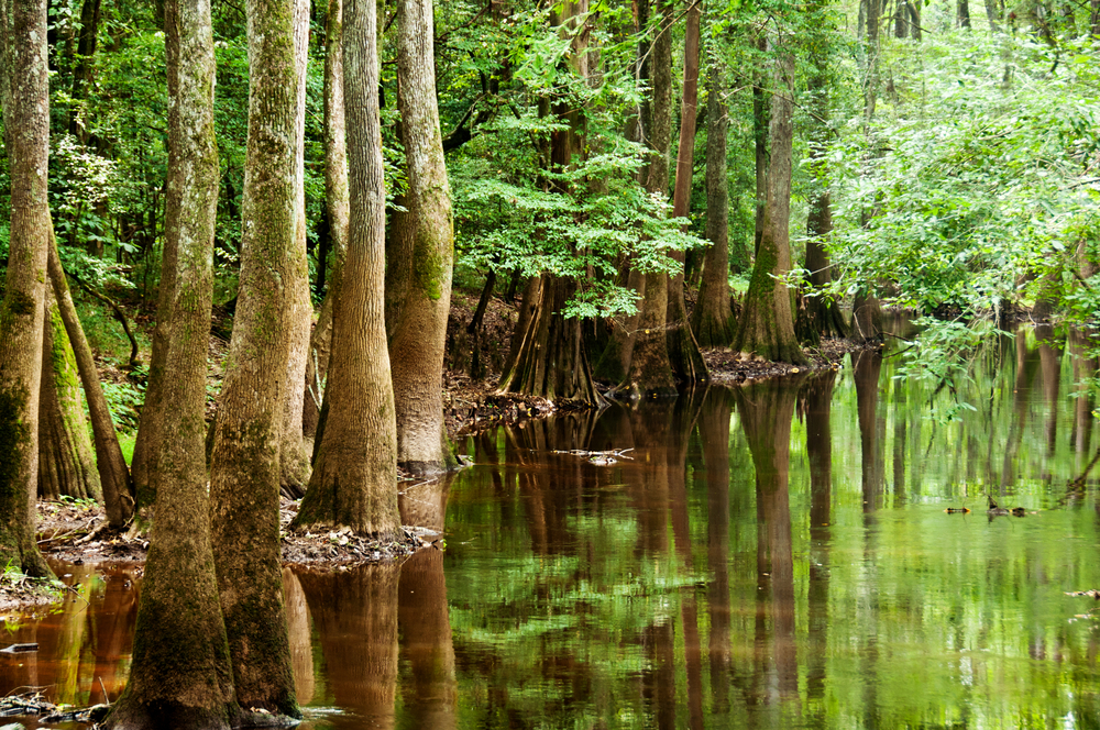 Swamp with leafy trees.