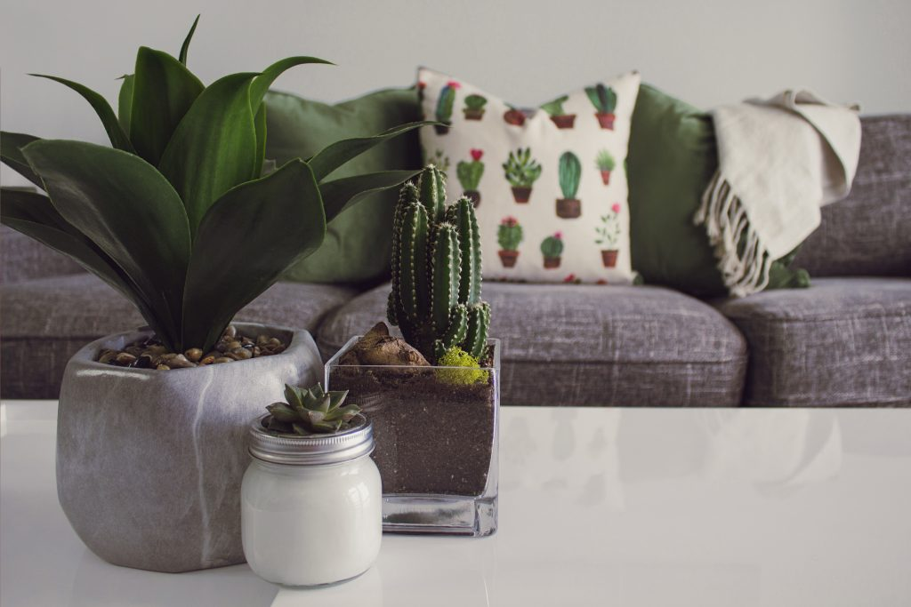 potted succulents in front of gray couch with succulent-printed pillows.