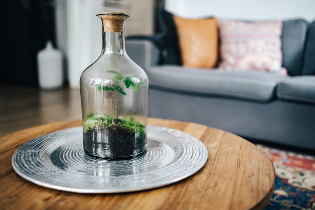 Terrarium sits on silver plate on wooden coffee table.