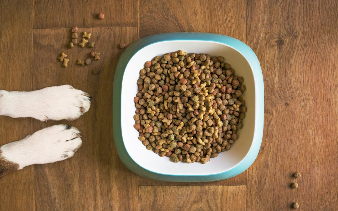 Photo of dog food in bowl from above, a dog's paws next to it.