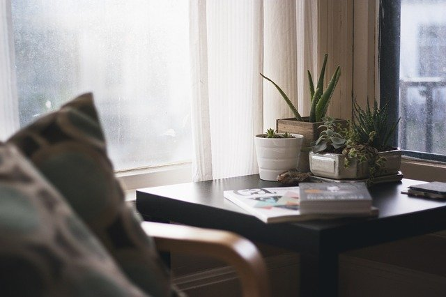 Succulent plants on a desk in a living room