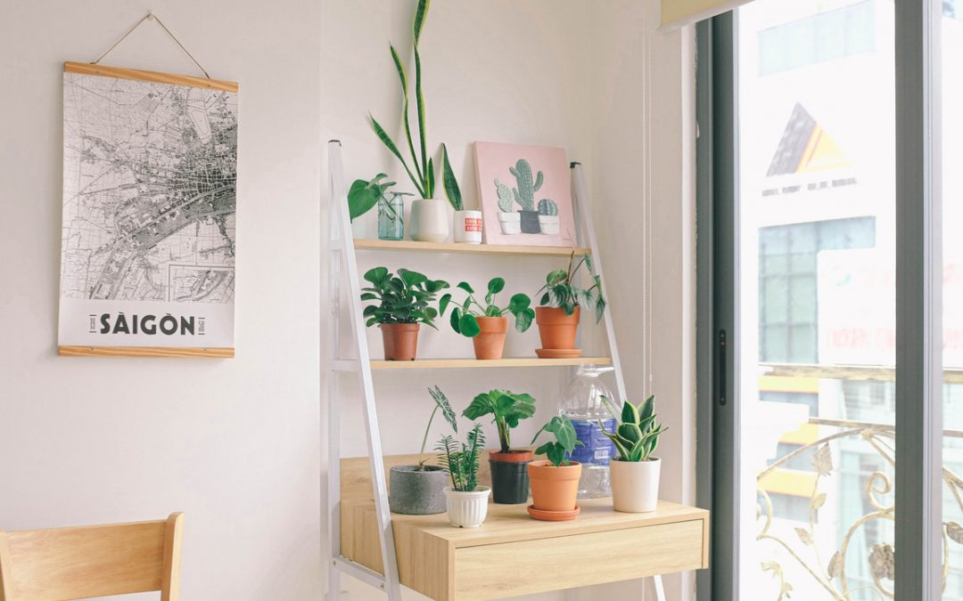5 Best Indoor Plants for Your Apartment