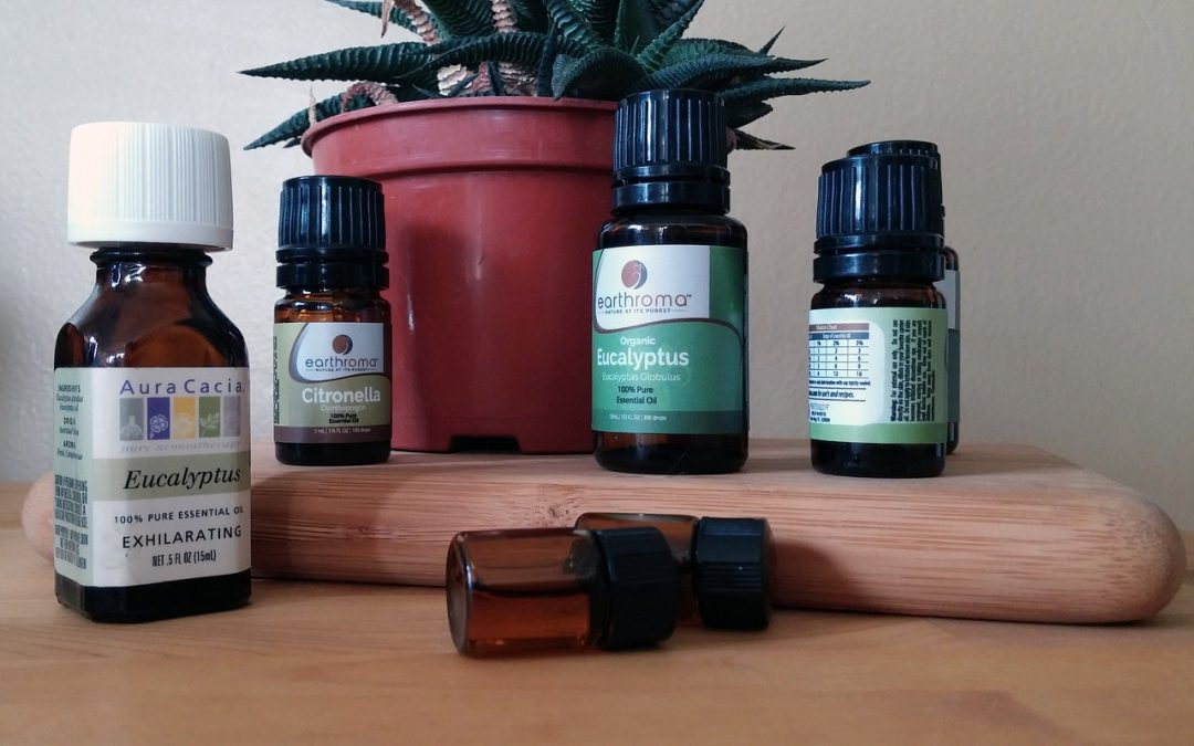 Natural Bug Repellents for Your Apartment